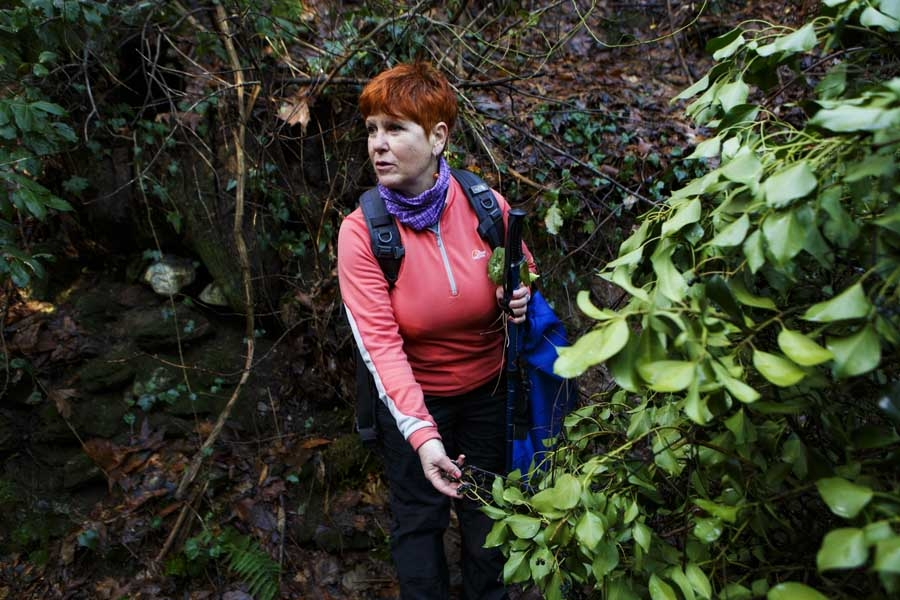 Photo Gallery: Herbology wandering through the trails and paths of Pelion